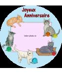 gâteau anniversaire chat